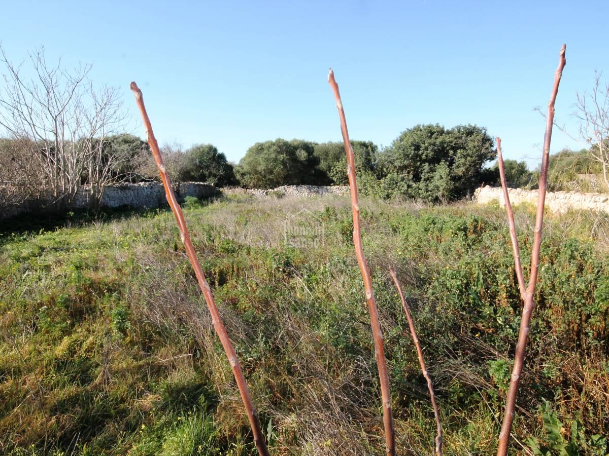 Comprar suelo r stico con boyeras en ruinas binisaida for Precio m2 suelo rustico