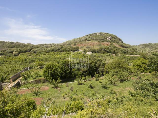 Fruit farm for sale, outskirts Alayor, Menorca