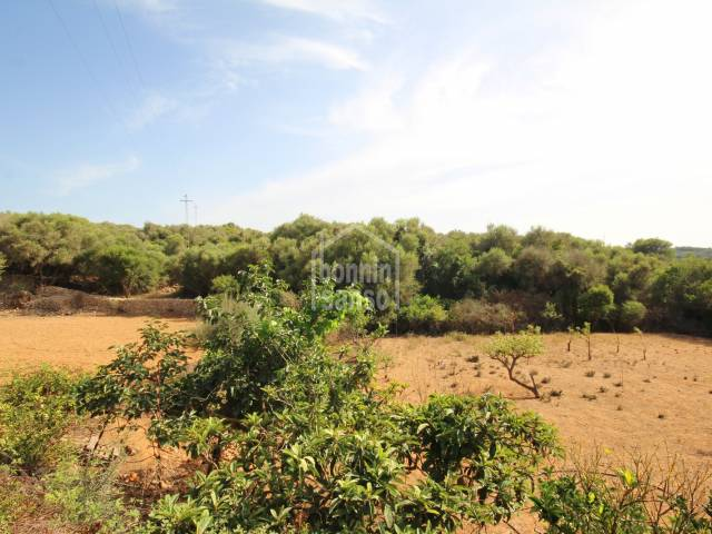 Orchard of more than 10,000 m² on the outskirts of Alayor, Menorca