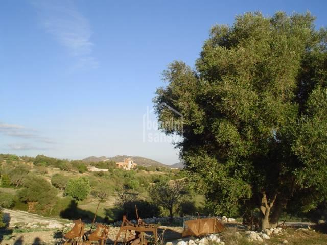 Bebaubar in Sant Llorenç (Town)